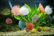 Bể cá nuôi bao nhiêu con thì tốt?